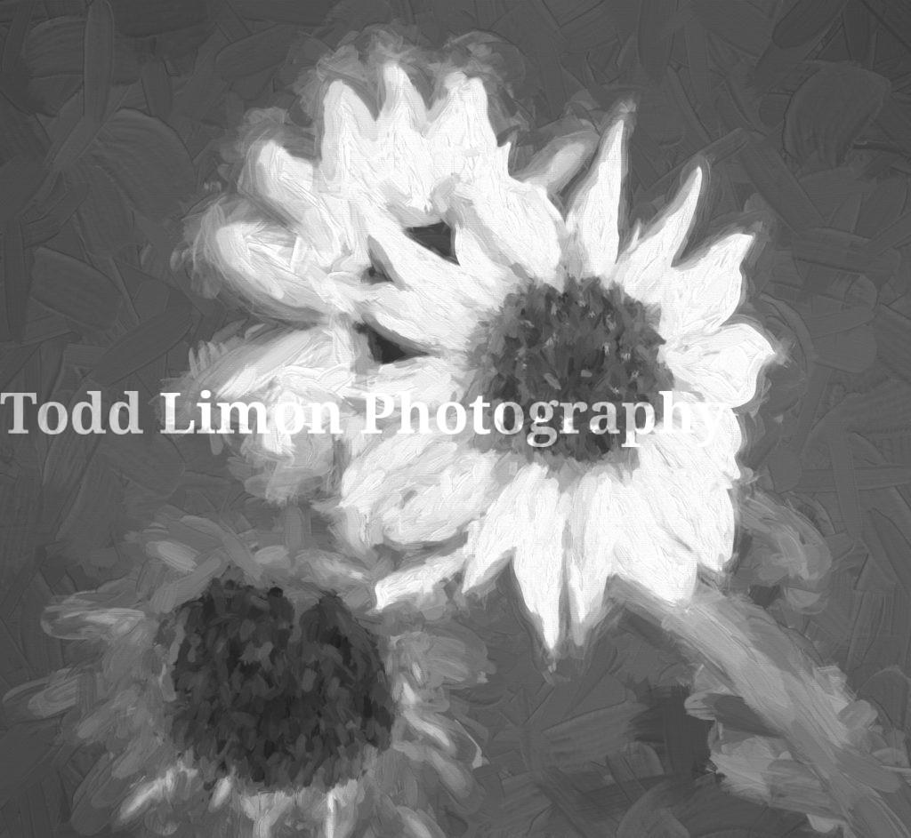 Sunflowers Topaz Impressions