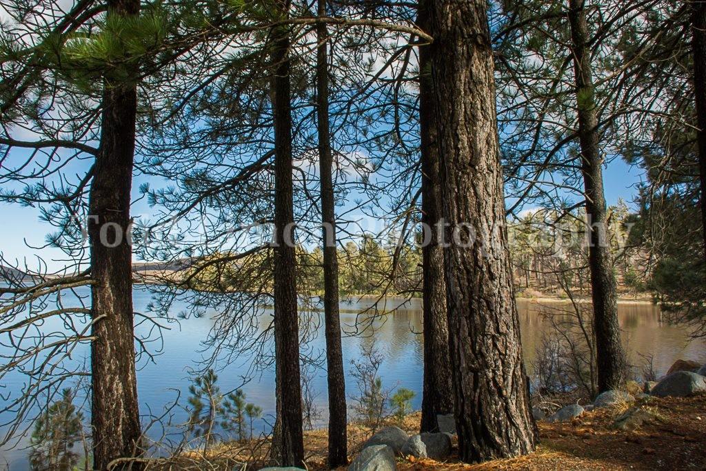 Lake Cuyamaca Trees